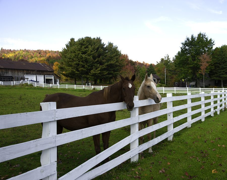 Horses over the Fence